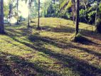 Beautiful Commercial Butiful Land for Sale -Matale-Matale