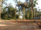 80 P Land Dodangoda Kalutara