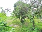 Bare Land for Sale in Nawala [LS37]