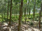 1 acre Rubber Land for sale in Hadapangoda