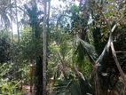 Land for Sale in Balangoda Wikiliya