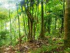 Land for sale in Wattegama Kandy