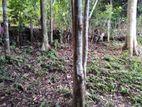 Land for Sale Kandy - Pilimathalawa (kalandurukotuwa)
