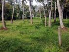 Land for Sale - Nittambuwa නිට්ටඹුව රුක්ගහවිල