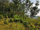 (LD94) 4 Acre 136.66 perches Rubber Land Sale At Kiriella