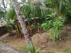 Luxury Land for Sale - Kottuwa