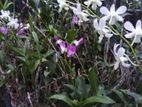 Orchid Plants and Flowers